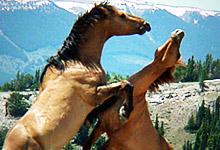 Wild Horses 6x6