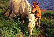 Wild Ponies 6x6