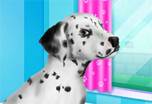 Dalmatian Puppy Day Care