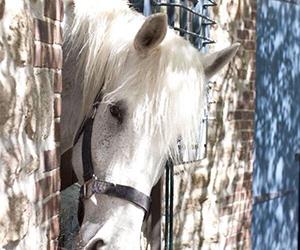 Hello White Horse - Amazing Horse Picture
