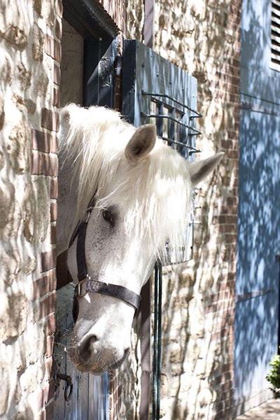 Hello White Horse