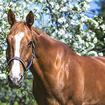 Horse and the Apple Tree