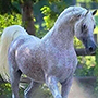 Horse Gorgeous and Unusual - Amazing photo of Horse