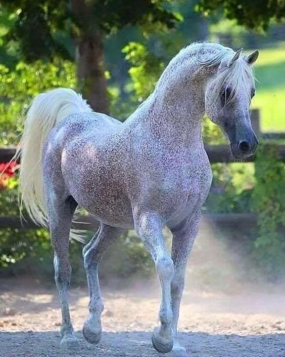 Horse Gorgeous and Unusual