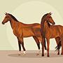 Horses Animal Farm - Free vector photo of horses in the farm