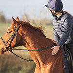 How to Ride My Horse with a Bitless Bridle