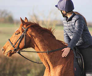 I was looking into doing some bitless with my mare however my knowledge with bitless is very limited as have never really looked into it before! Was wondering what bridles people would recommend?