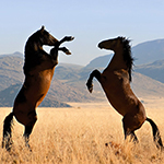Interesting facts about horses