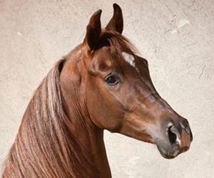 Lovely Tobiano Pinto Arabian Cross - Amazing Tobiano Pinto Horse