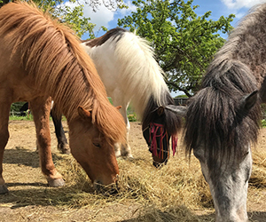 Pluto was adopted by Alex when he was just a six-month-old pony. Pluto was welcomed as a family member at the barn house and Jolly, the mare, took charge of him.