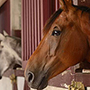Producing Free Horse Tips - News and Stories
