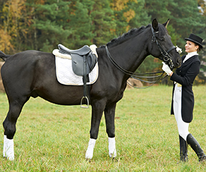 Horses need care and kindness, as all animals do, and they give their best when prompted gently. They are good learners, and once they have mastered some tricks, horses will perform them well if prodded gently to do it.