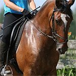 What you can learn from your horse