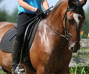 During the work with horses, experiencing personal development accompanied by direct feedback, the self-confidence of the child will gradually increase. The difficulties encountered during the riding and the achievement of the goals set for the sessions have a sense of accomplishment and great success experience.